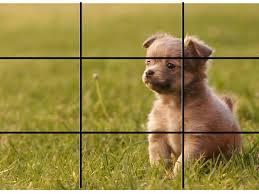 pup rule fo